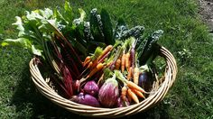 Eggplant, peppers, kale, beets and carrots from Half Moon Harbour Apartments in North Bergen!