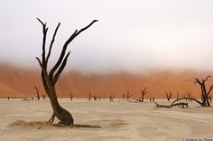 Deadvlei in Namibia by Grobler du Preez Painting Inspiration, Africa, Around The Worlds, Country Roads, Places, Nature, Photography, Travel, Amazing Things