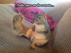 Lazy Pet Squirrel