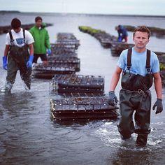 Hardworking oyster farmers in Duxbury Bay Massachusetts