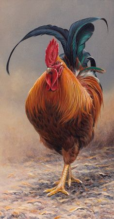 Close up of cockerel approaching - Happy Tiere Beautiful Chickens, Beautiful Birds, Animals Beautiful, Rooster Painting, Rooster Art, Chicken Painting, Chicken Art, Farm Animals, Animals And Pets