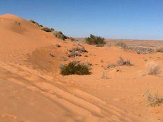 The Simpson Desert Wildlife, Country Roads, Australia, Landscape, Places, Scenery, Corner Landscaping, Lugares