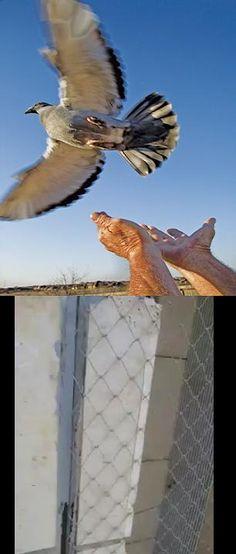 התקנת דוקרנים להרחקת יונים - התקנת רשתות להרחקת יונים Pigeon, Owl, Bird, Animals, Animales, Animaux, Owls, Birds, Animal