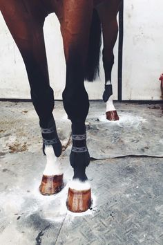 natshorses: thatlongstride: equitating: Perfection. Credit: ilovesasquatch Wow this is very satisfying wow Sometimes I wish my horse had white legs, just so I'd have something to do during my grooming at shows…