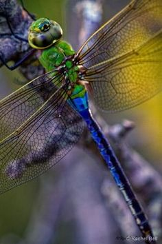 Dragonfly by Eva0707