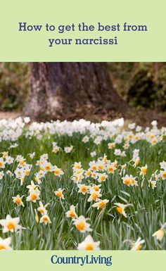 A beautiful hillside garden in west Sussex is home to narcissi and 26 different varieties. Find out how to get the best from yours. Hillside Garden, Cottage Style, House Colors, Gardening Tips, Flower Arrangements, Farmhouse Landscaping, Herbs, Backyard, How To Get