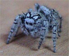 Beautiful! Blue Spider! - Arachnology Photo (31947262) - Fanpop