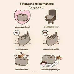 Reasons to be thankful for your cat XD