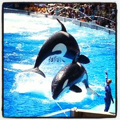 Seaworld - Next vacation for sure.