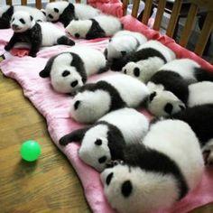 Ouuu pandas :)