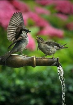 So cute...love to see the birds come to the water in the garden! <pin by ReBeCcA on iN tHe GaRdEn>