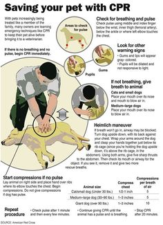 Saving your pet with CPR---> I didn't even know this was possible