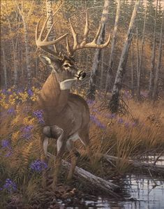 Wildlife Paintings, Wildlife Art, Animal Paintings, Deer Paintings, Deer Targets, Hunting Art, Hunting Stuff, Whitetail Deer Pictures, Deer Drawing