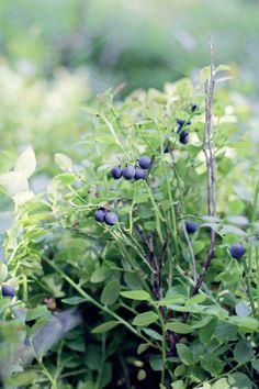 bleuberries