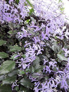 Purple #purple #flowers #spring