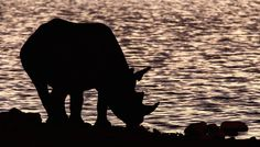 A new study reports the long-suspected mass extinction of wildlife is 'already under way.'