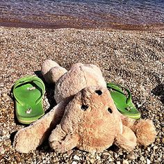 Bear on the Beach : During the late Indian summer in the south, Bear found back the seashore. Not the North Sea, but the deep blue Med...