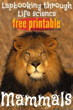 Free Mammals Lapbook: Lapbooking through Life Science