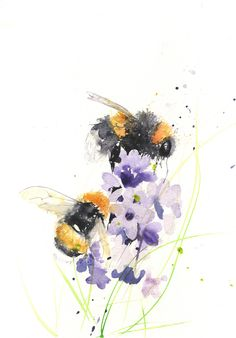 Bee print, limited edition, of my BUMBLE BEES hand signed, illustration, animal art - - Horse Canvas Painting, Bee Painting, Oil Painting Flowers, Watercolor Flowers, Watercolor Art, Watercolour Paintings, Horse Paintings, Watercolours, Flower Yellow