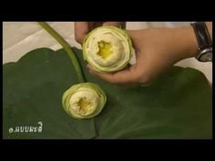 สาธิตไทย ตอน พับดอกบัว - YouTube Lotus Art, Arte Floral, Flower Shops, Corks, Awakening, Hand Embroidery, Flowers, Bucket, Bangles