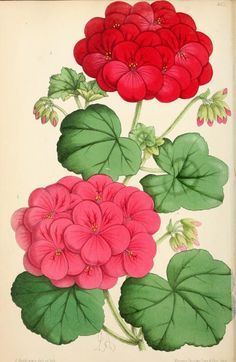 8, 1869 - The Floral magazine; - Biodiversity Heritage Library