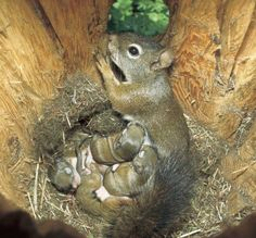 Squirrel babies & mother