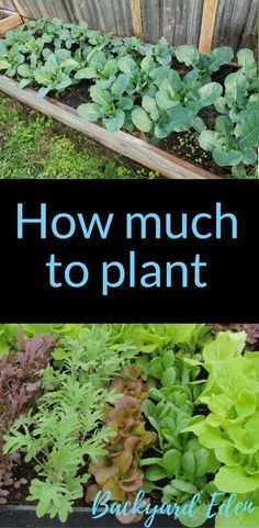How much to plant | How many of each plant to grow | Organic Gardening | Organic Gardening for Beginners | Planning a garden | Organic Fertilizers | Gardening Tips | Vegetable Gardening | Backyard-Eden.com #gardeningforbeginners #organicgardenhowto #organicgardeningtips #organicvegetablegardening #howtogrowagarden