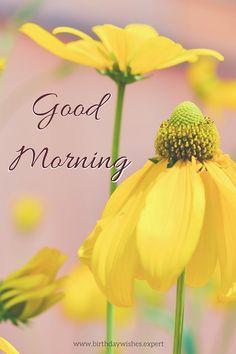 Good Morning Floral Image