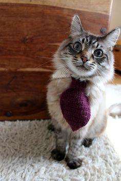 15+ #Crochet Patterns for Animals - Crochet pet tie pattern free from Moochka