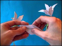 Origami Lily with 5 petals