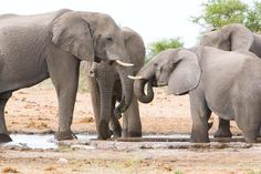 Villa Mushara | Signature African Safaris Largest Countries, African Safari, National Parks, Elephant, Villa, Landscape, Gallery, Animals, Animales