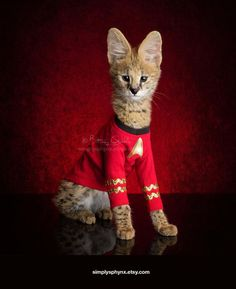 Star Trek Engineer Halloween Pet Costume sphynx cat clothes Star Trek Shirt Dog Costume Costumes for Pets Spock Shirt for Pets by SimplySphynx
