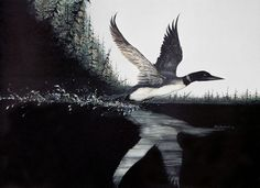 Loon Taking Off  Painting by jimdickens on Etsy, $40.00