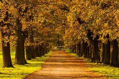 Fotostrecken - Wetter Bilder und Fotos - WetterOnline Ihre schönsten Herbstbilder bei WetterOnline. Aufnahme von Kai Weishapl.