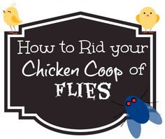 How to Rid your Chicken Coop of Flies