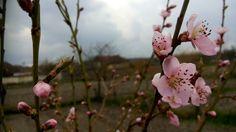 #sobeautiful #spring Spring, Plants, Garden, Beautiful, Garten, Planters, Gardening, Outdoor, Home Landscaping