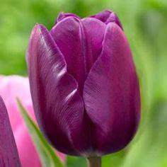 Longfield Gardens: Negrita (25) (right of sauternes)