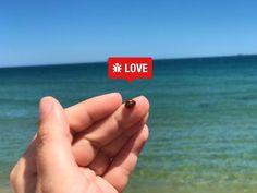 Muy buenos días !  Vais a la playa hoy ?  Tened cuidado con las !! Este es el único insecto que me gusta. Las mariquitas son muy buenas para las cosechas  ya que se comen los hongos y otros insectos que las pueden dañar.  Yo creía que solo se encontraban en el campo y los bosques  no cerca del mar. Será por el cambio climático ? Debemos proteger a las   porque aunque parece un insecto insignificante  es muy bueno para el    Y después de la lección de hoy  os deseo muy buen fin de semana ! A…