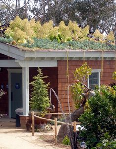 Green Roof Entry Arbor to reduce heat in summer and insulate in winter, reducing energy costs, plus it looks great.