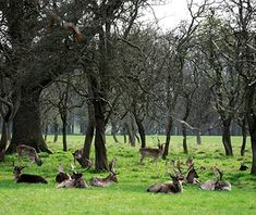 World's Most Beautiful City Parks: Phoenix Park