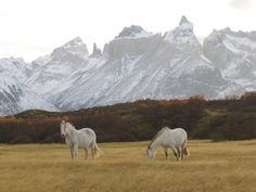 White horses, Patagonia. Check out Brigette's review of Andrew McCarthy's The Longest Way Home: One Man's Quest For The Courage To Settle Down here: http://chaptersandscenes.wordpress.com/2014/07/11/brigette-reviews-the-longest-way-home/