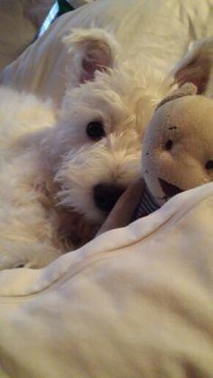 Tosca with her teddy bear