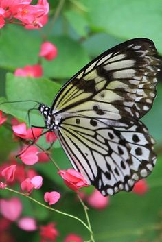 I don't know what kind of butterfly this is, but it is so beautiful..