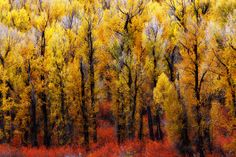 **Nature's Palette  by Kelly Glasscock  Autumn - Jackson Hole burns bright with colors of fall foliage.