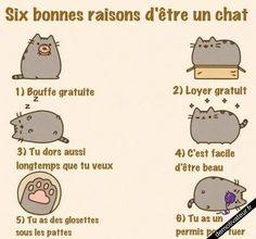 Voulez-vous être un chat? :D (image only)