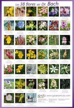 Moon Art, Medicinal Plants, Medicine, Remedies, Outdoor Structures, Nature, Flowers, Tattos, Homework