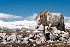 18 Breathtaking Photos Of Wild Horses Around The Globe - BuzzFeed Mobile