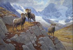 Bighorn sheep painting by Ralph Oberg