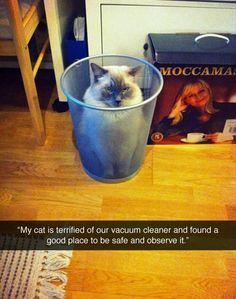 Hahaha! Hilarious!