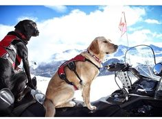 Copper Mountain Avi Dogs... Trippfayphotography.com
